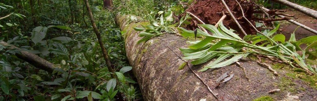 Van boom in tropisch gebied tot hardhouten plank